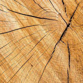 Holzstaenderbauweise