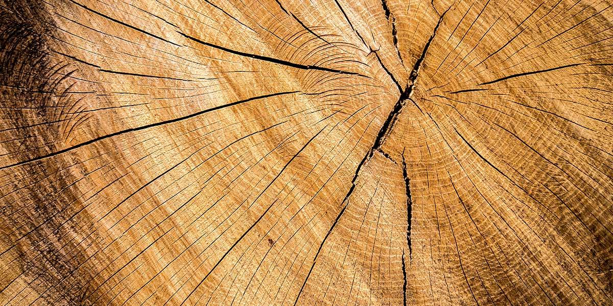 Die Vor- und Nachteile der Holzständerbauweise beim Fertighaus