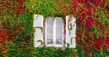 das-richtige-Fenster