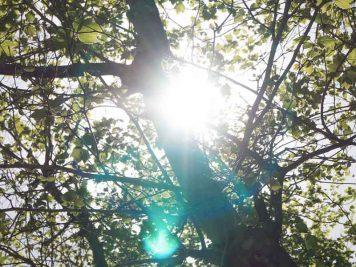 photovoltaikanlagen-fuer-den-garten